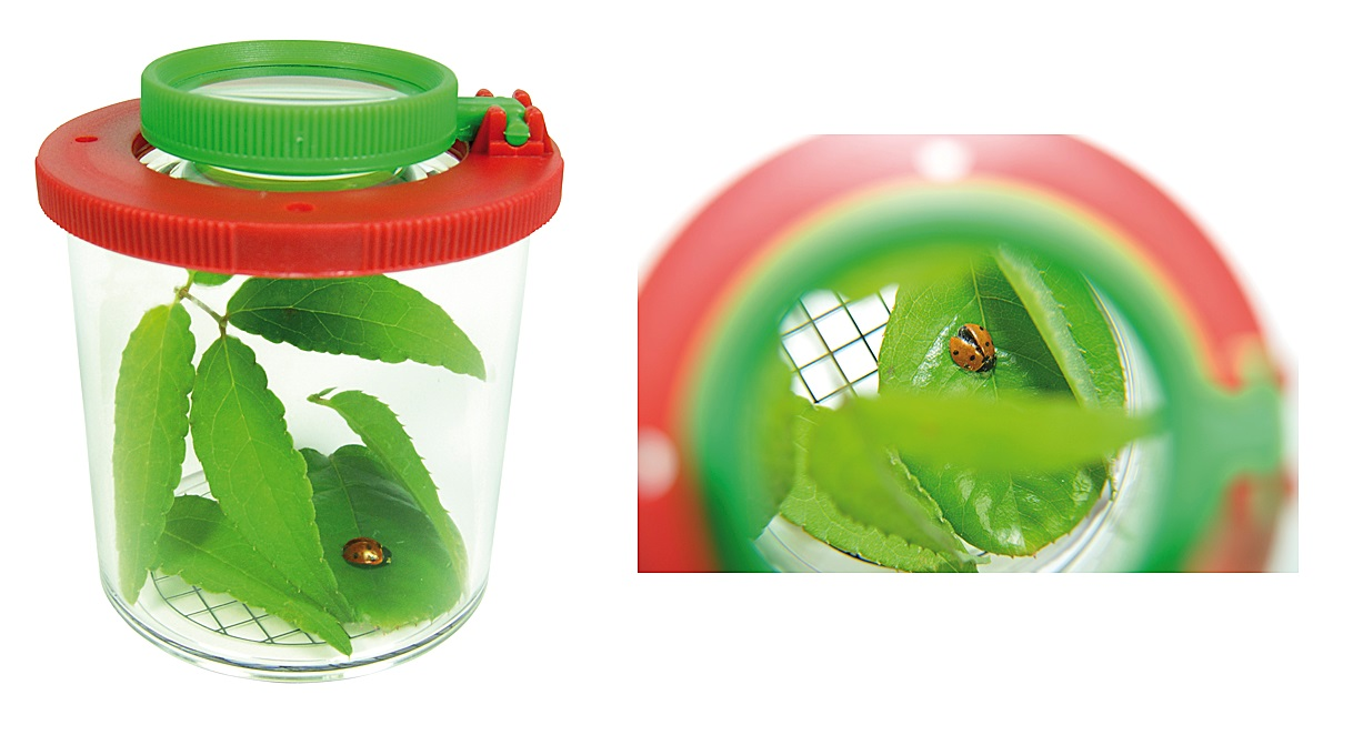 KINDER XL Lupendose Aquarium Käfig für Käfer Tiere Insekten Frösche Bienen Wespe